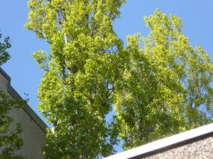 Baumkrone vor dem Dach