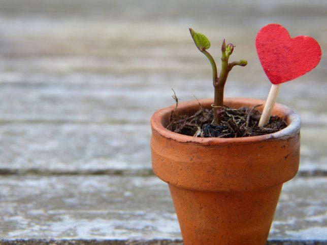 Beim Wachsen begleiten - das besondere Alter zwischen Loslassen und Halt geben
