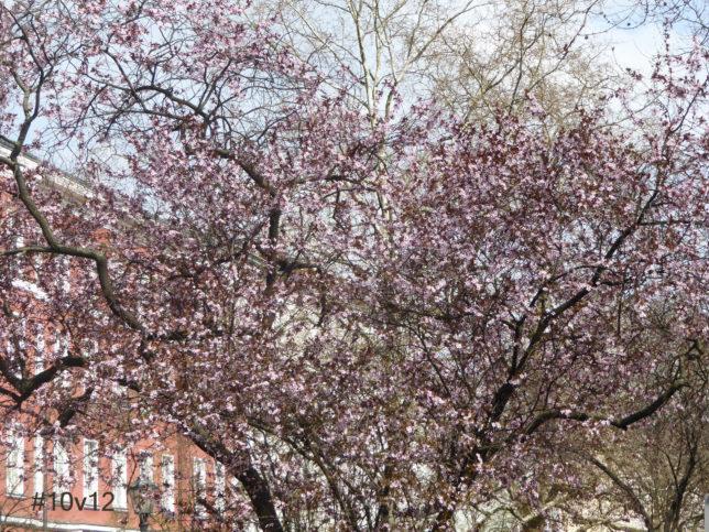 Wunderschöner Frühling - Kreuzberger Baumpracht