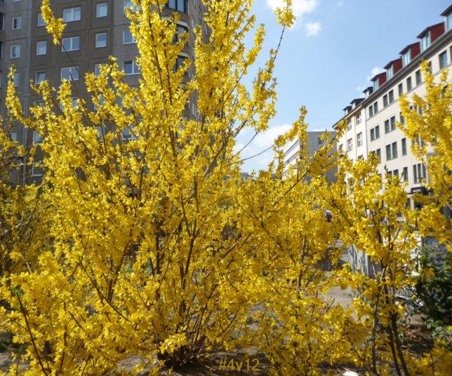 Mit aller Macht setzt sich nun der Frühling in der Stadt durch.