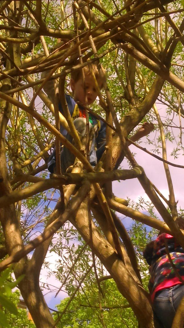 zwei im Baum