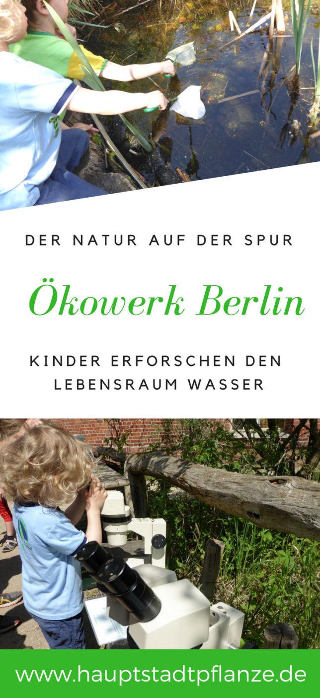 Ökowerk Berlin - Kinder erforschen die Natur im Grunewald. Was lebt in See und Tümpel? Mit Mikroskopen und Kescher der Natur auf der Spur.
