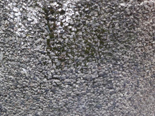 Spinne auf Stein