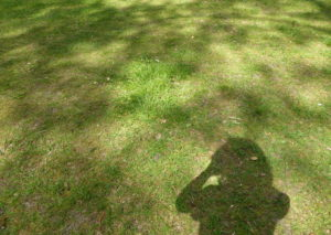 Foto vom Rasen