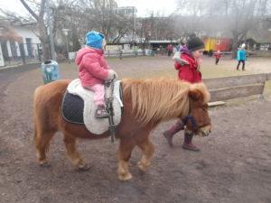 Ponyreiten Kinderbauernhof nusz   Berlin mit Kindern