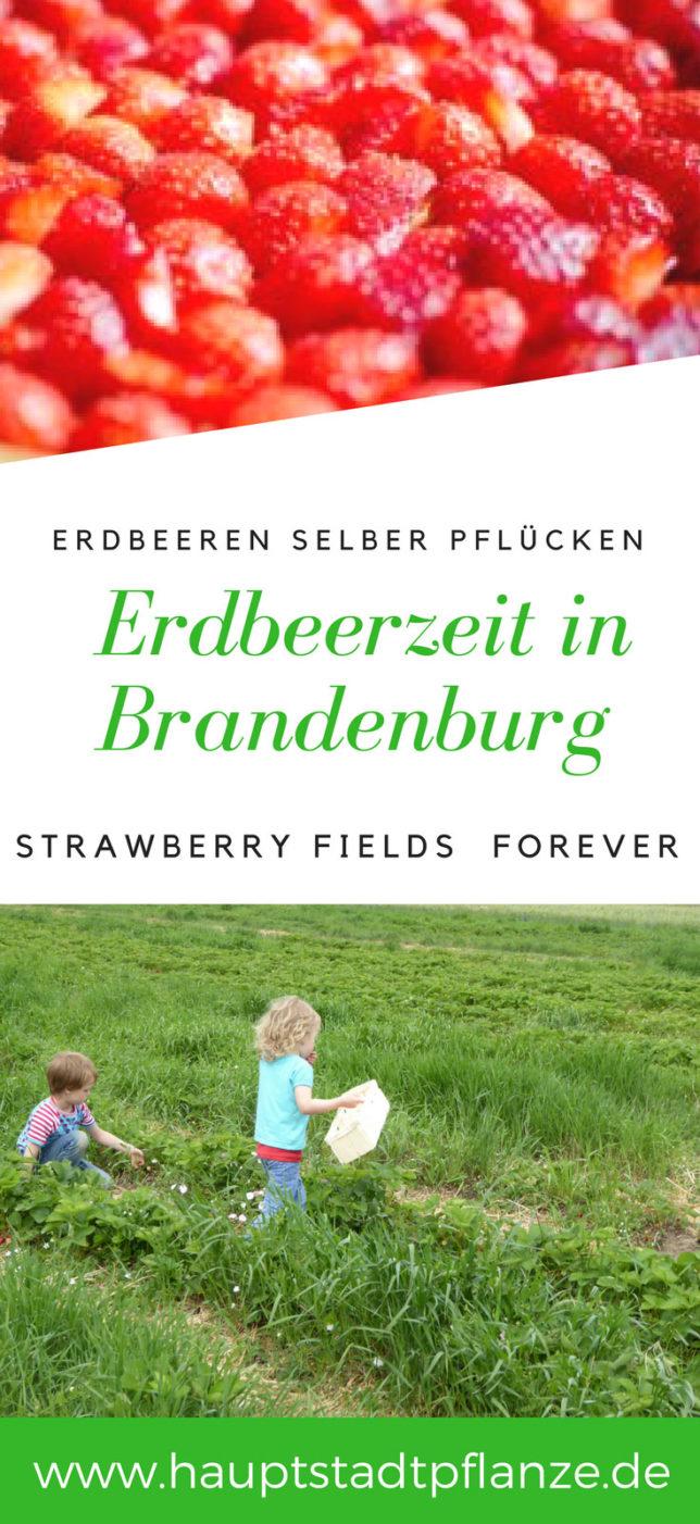 Erdbeeren selber ernten (und essen) - Familienausflug in Brandenburg