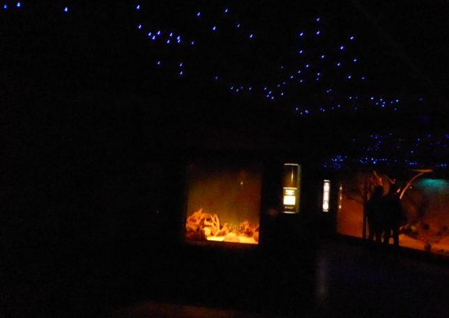 Nachttierhaus Zoo Berlin | Abenteuer für Kinder