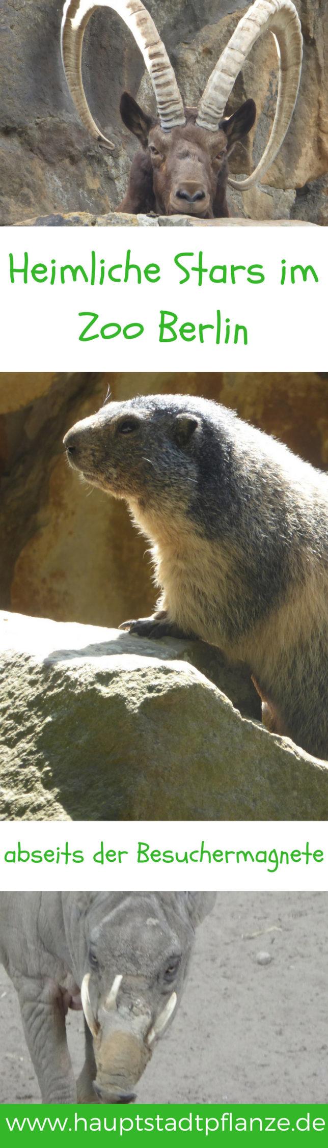 Ob Murmeltier oder das Nachttierhaus, entdeckt mit Kindern die weniger bekannten Arten im Zoo Berlin.