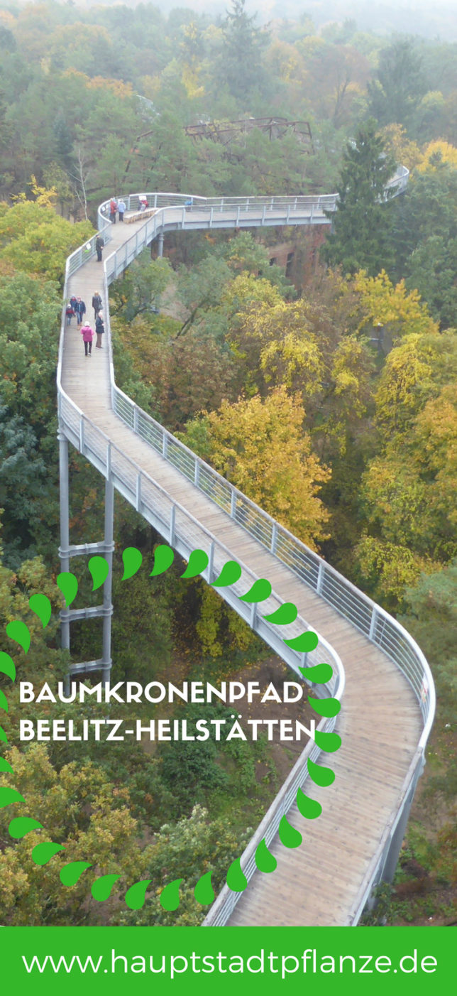 Baumkronenpfad bei Berlin | Herbst mit Kindern | Familienausflug Brandenburg