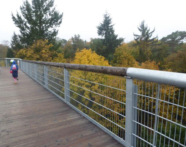 Baumkronenpfad Beelitz-Heilstätten | Baumarten lernen