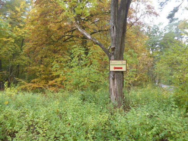 Wegbeschreibung Baumkronenpfad Beelitz-Heilstätten