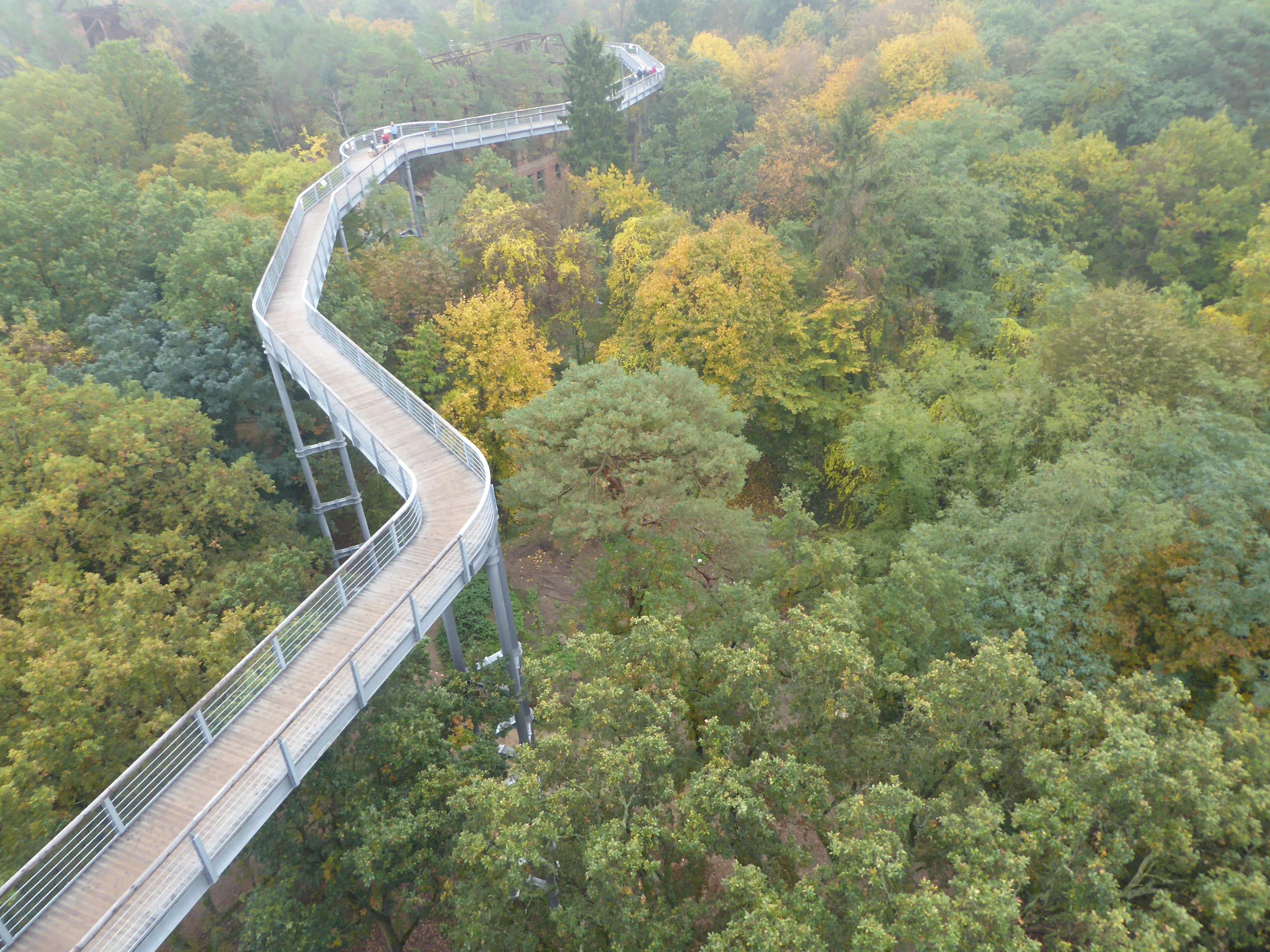 Ausflug ins Herbstlaub – Baumkronenpfad Beelitz-Heilstätten
