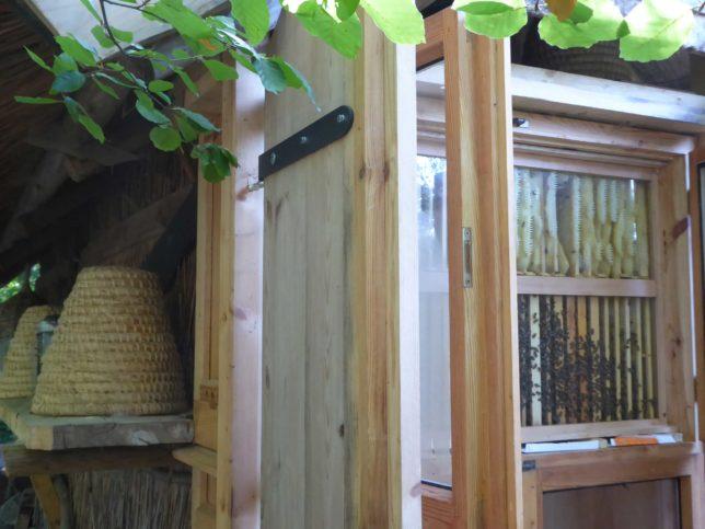 Bienenvolk im Museumsdorf Düppel | Umweltbildung
