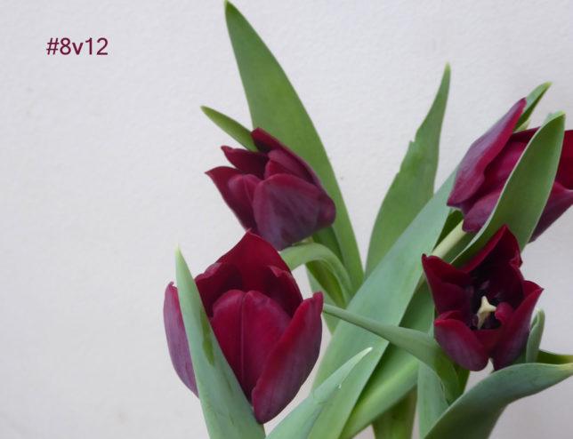 #12von12 im März | Frühling in der Vase