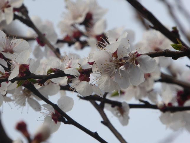 Blütenpracht bei #12von12