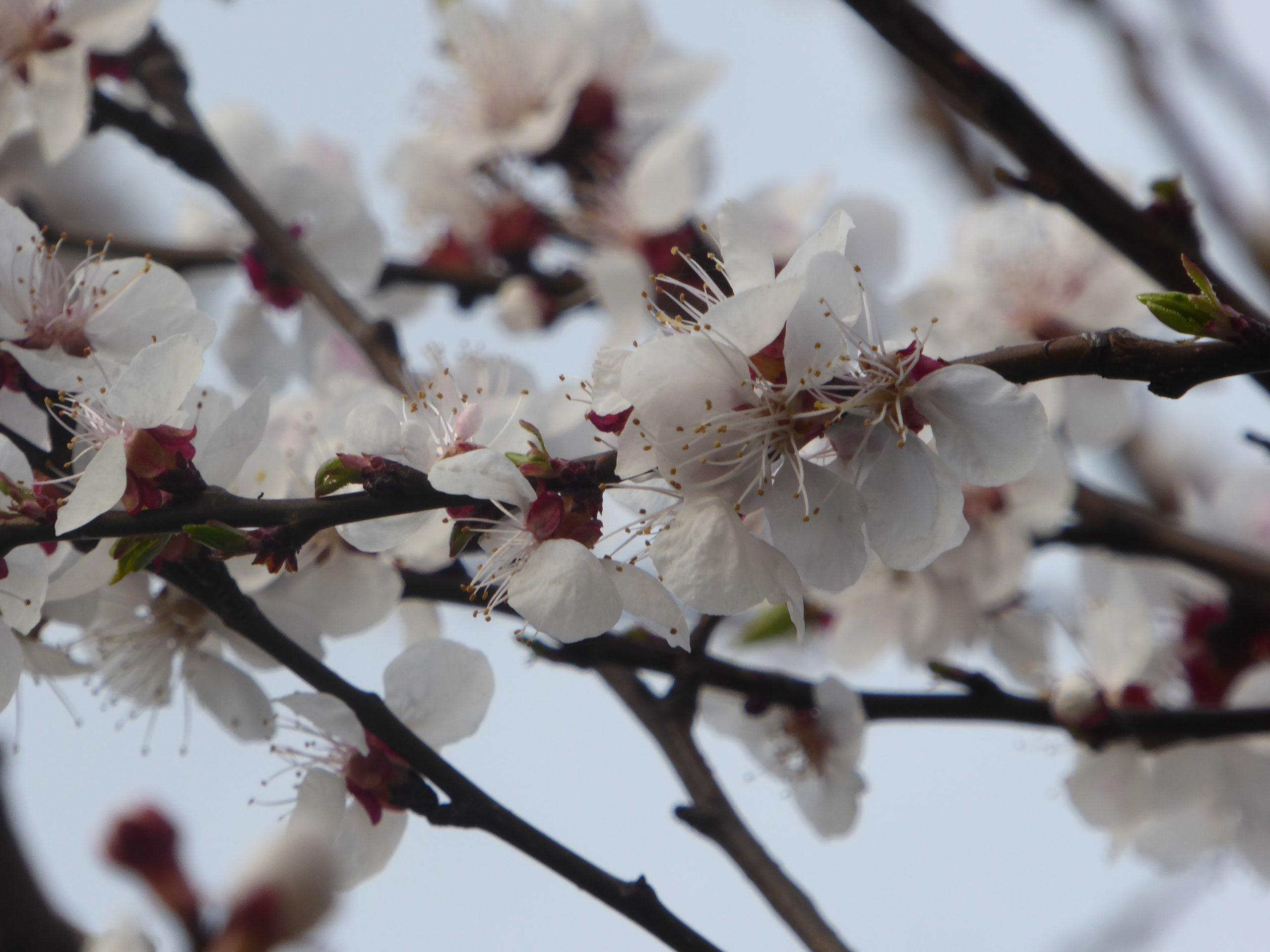 #12von12 April 2018: Frühlingstag