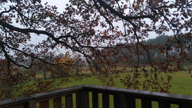 Übernachten im Baumhaus: nebeliger Morgen